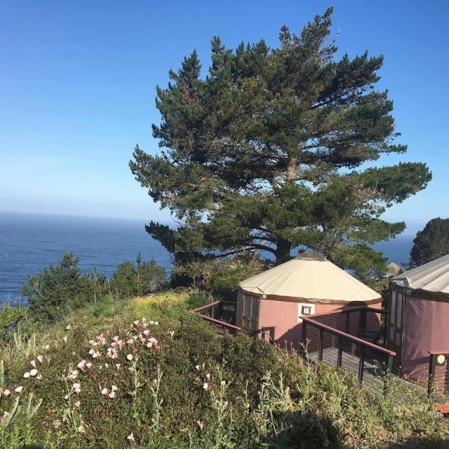 Treebone yurts